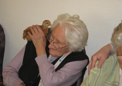 Tierische Mitbewohner und Besucher