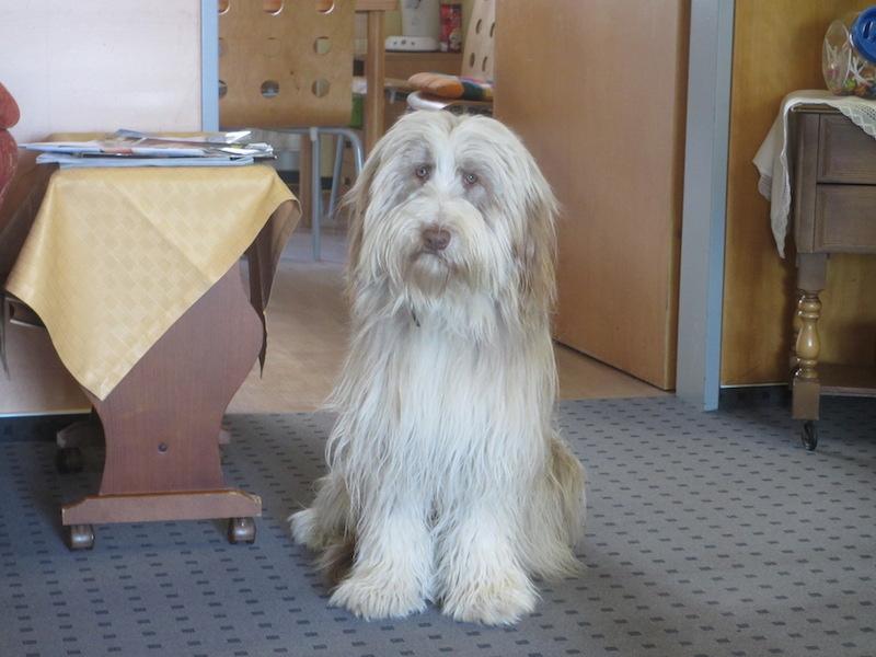 Unser Haushund Niko